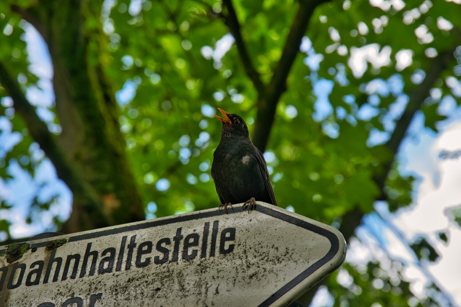 Read more about the article Amsel-03-06-21